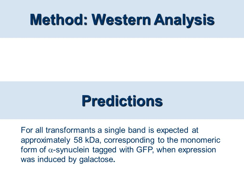 Method: Western Analysis