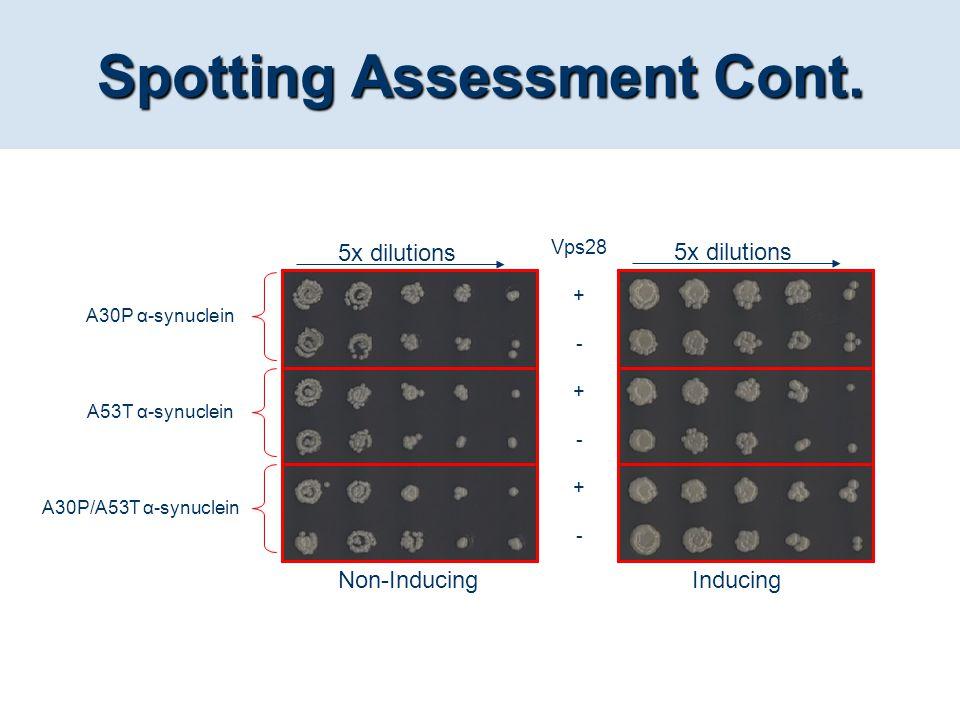 Spotting Assessment Cont.