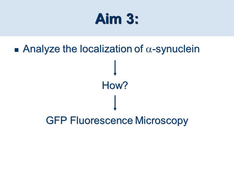 GFP Fluorescence Microscopy
