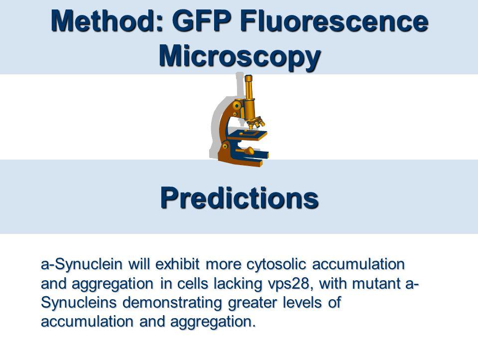 Method: GFP Fluorescence Microscopy