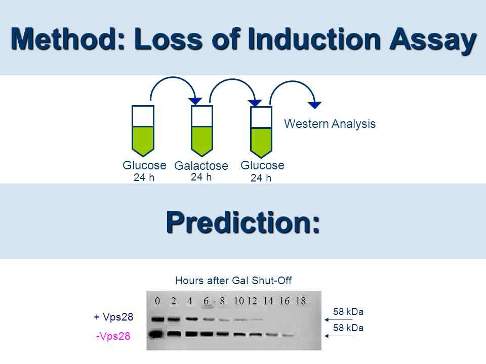 Method: Loss of Induction Assay