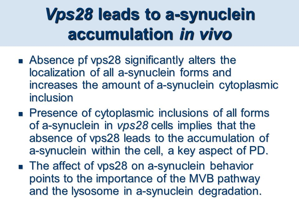 Vps28 leads to a-synuclein accumulation in vivo