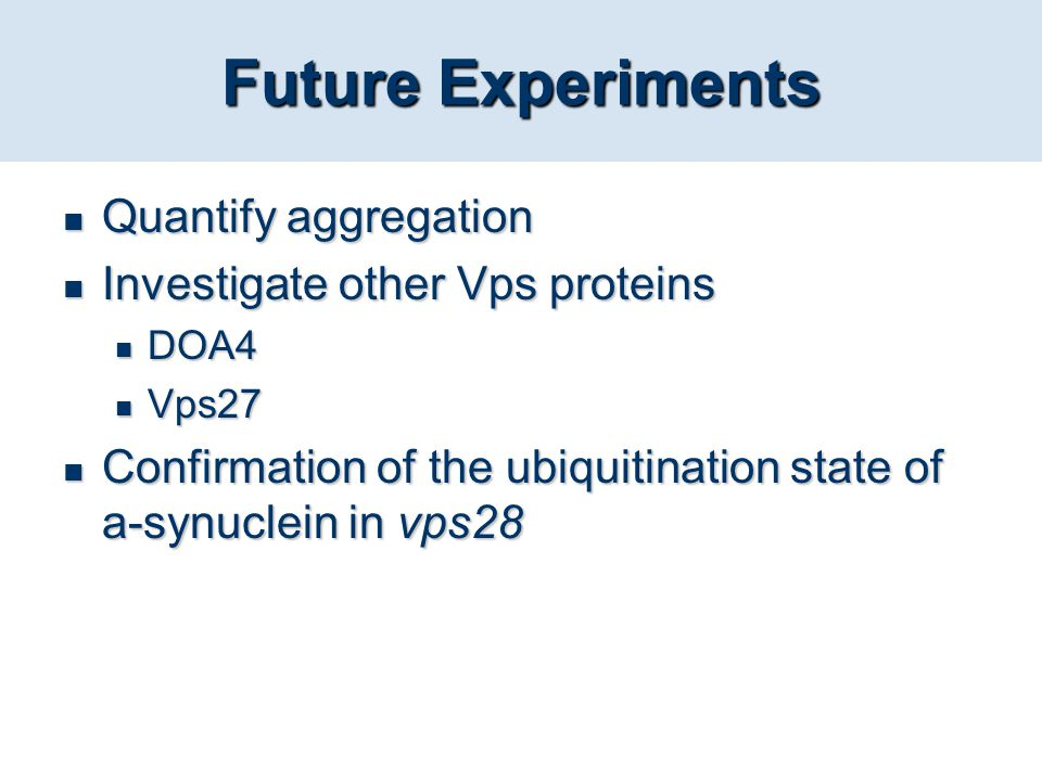 Future Experiments Quantify aggregation Investigate other Vps proteins