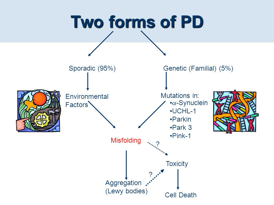 Two forms of PD Sporadic (95%) Genetic (Familial) (5%) Environmental