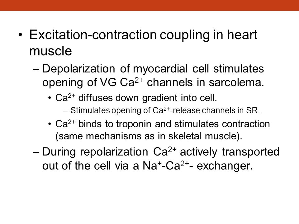 Excitation-Contraction Coupling in Heart Muscle