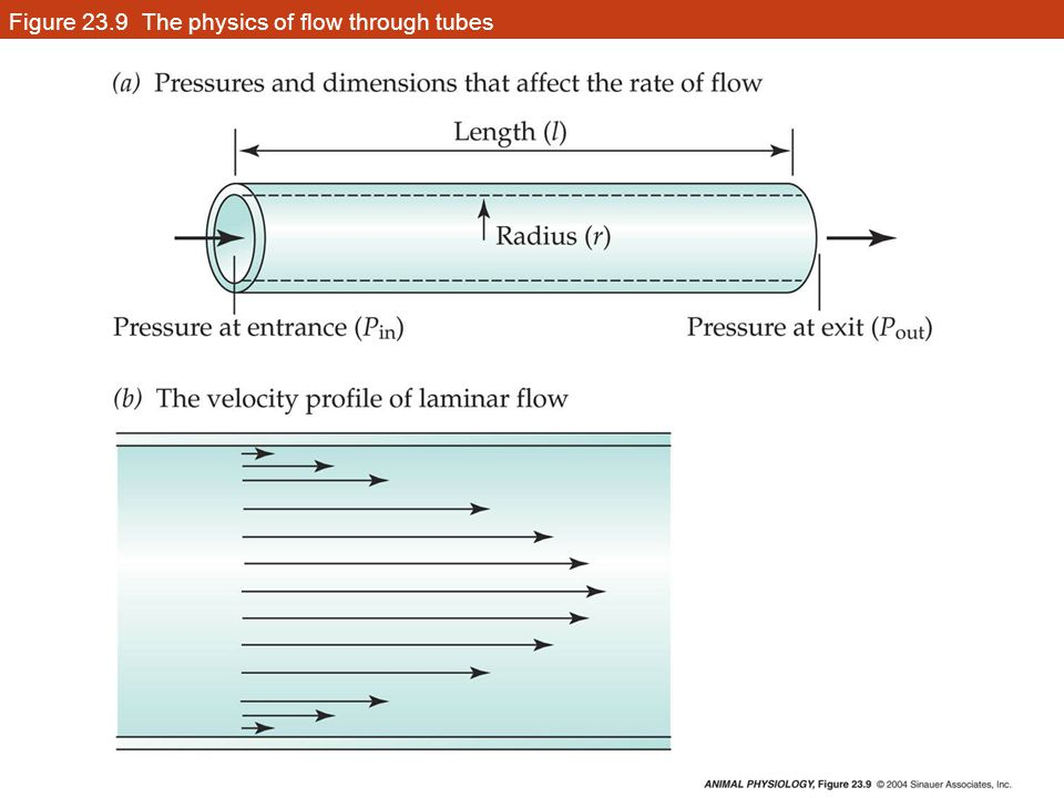 Figure 23.9 The physics of flow through tubes