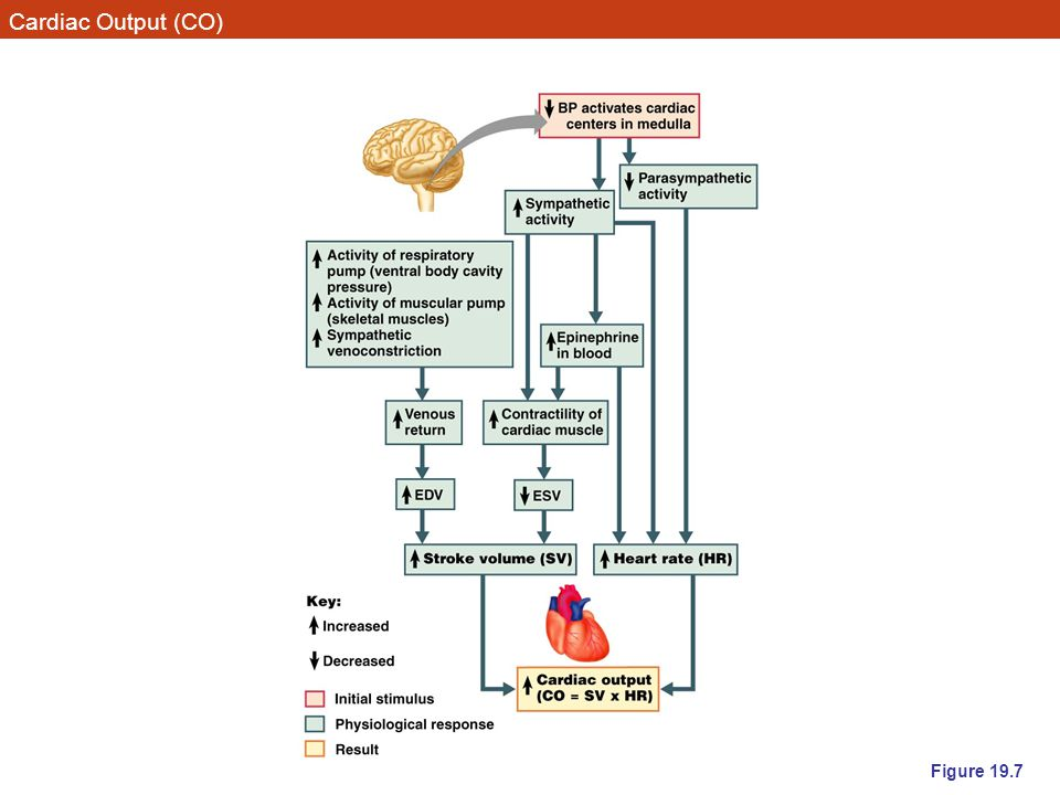 Cardiac Output (CO) Figure 19.7
