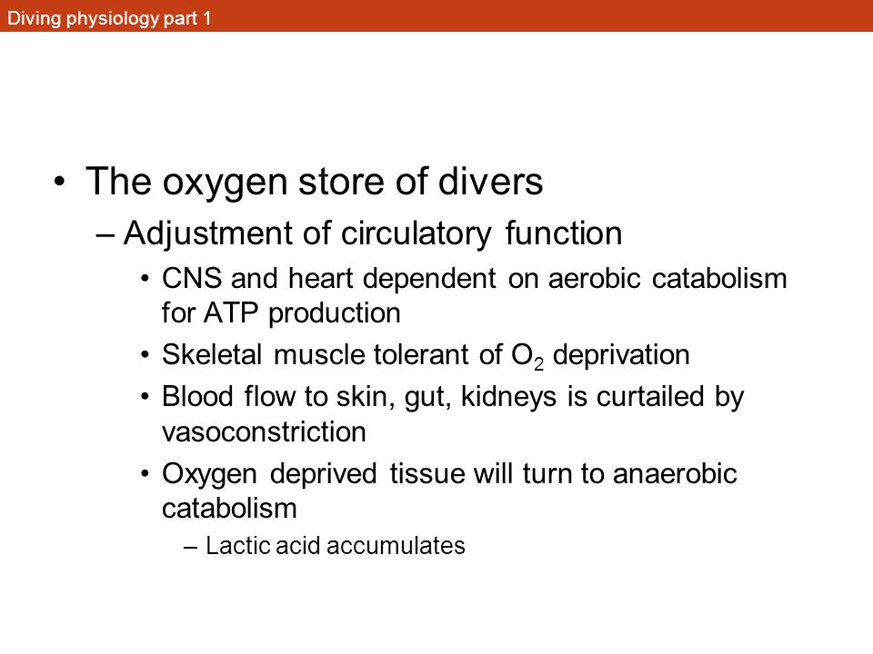 Diving physiology part 1