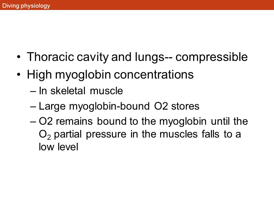 Thoracic cavity and lungs-- compressible High myoglobin concentrations