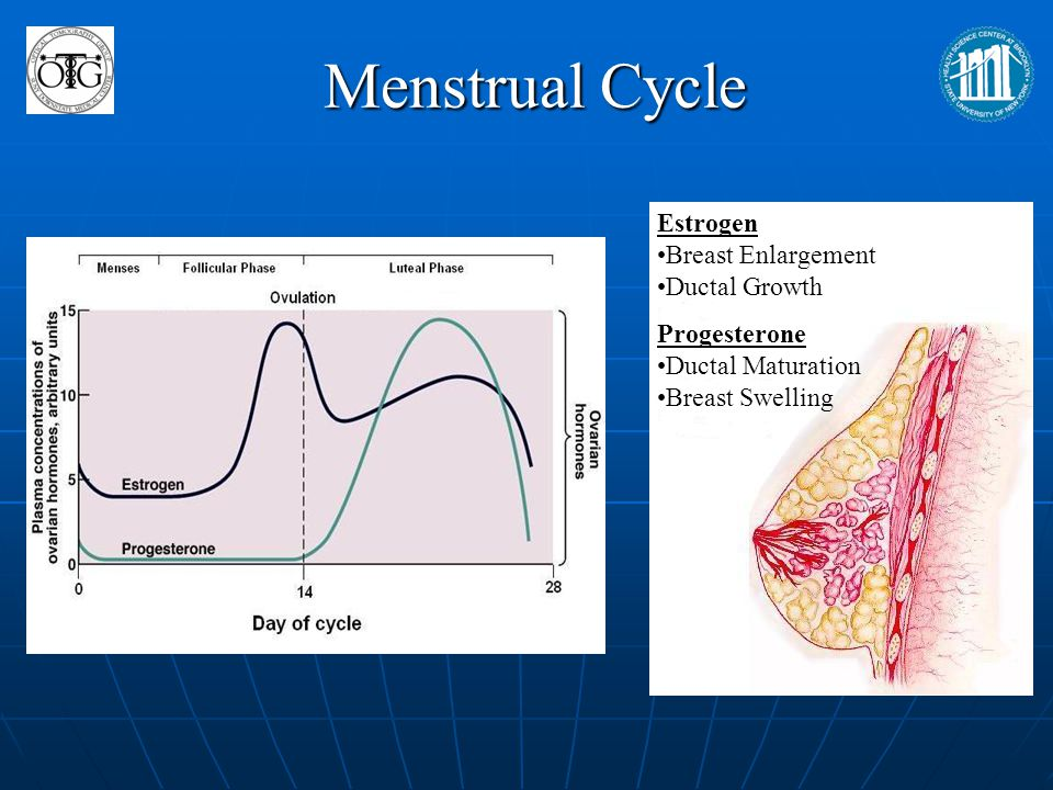 Menstrual Cycle Estrogen Breast Enlargement Ductal Growth Progesterone
