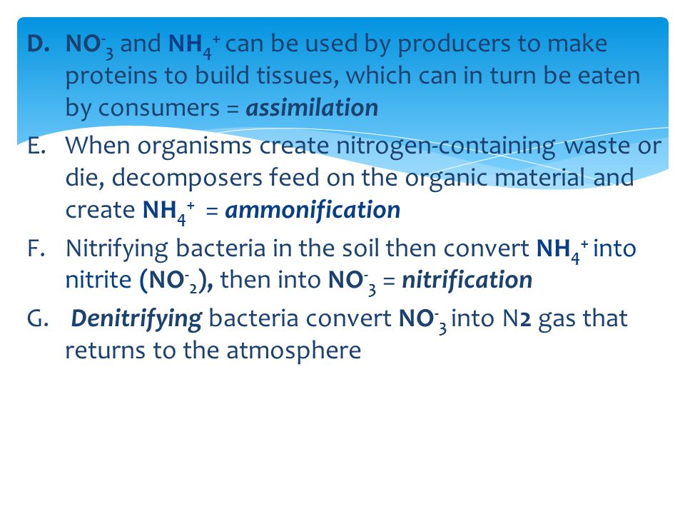 NO-3 and NH4+ can be used by producers to make proteins to build tissues, which can in turn be eaten by consumers = assimilation