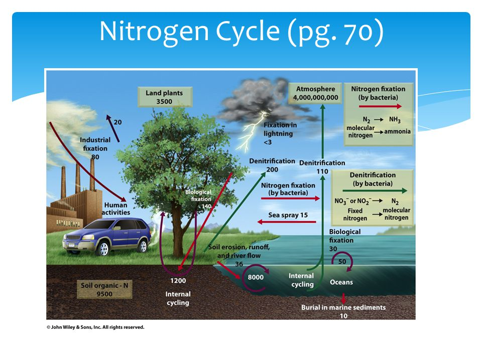 Nitrogen Cycle (pg. 70)