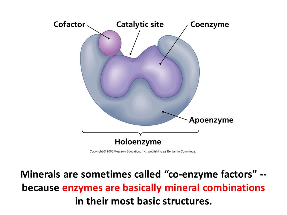 Minerals are sometimes called co-enzyme factors -- because enzymes are basically mineral combinations in their most basic structures.