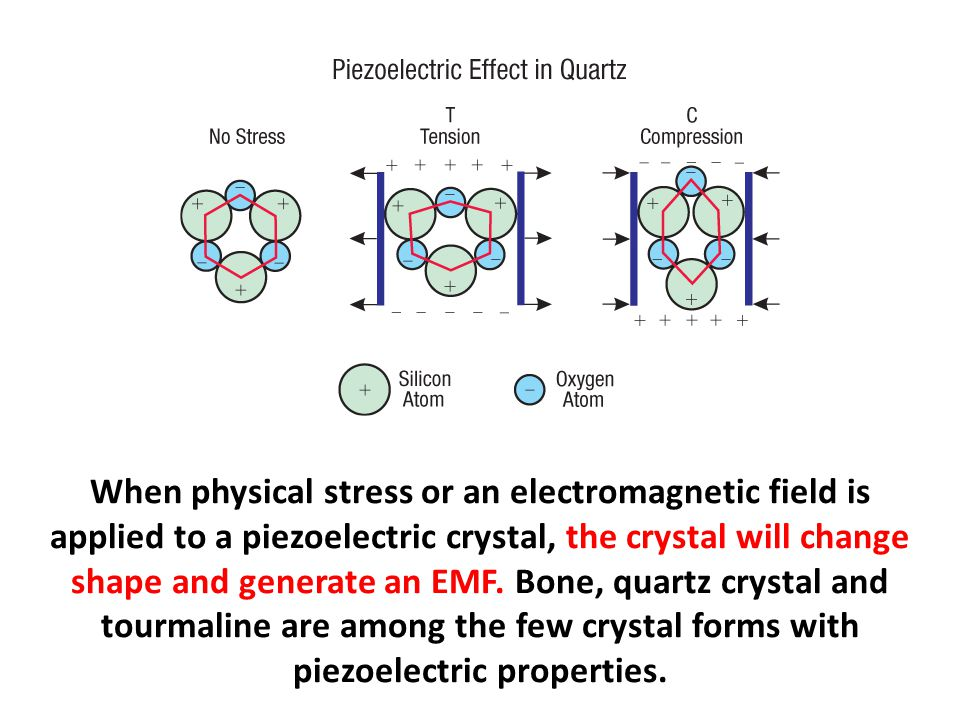 When physical stress or an electromagnetic field is applied to a piezoelectric crystal, the crystal will change shape and generate an EMF. Bone, quartz crystal and tourmaline are among the few crystal forms with piezoelectric properties.