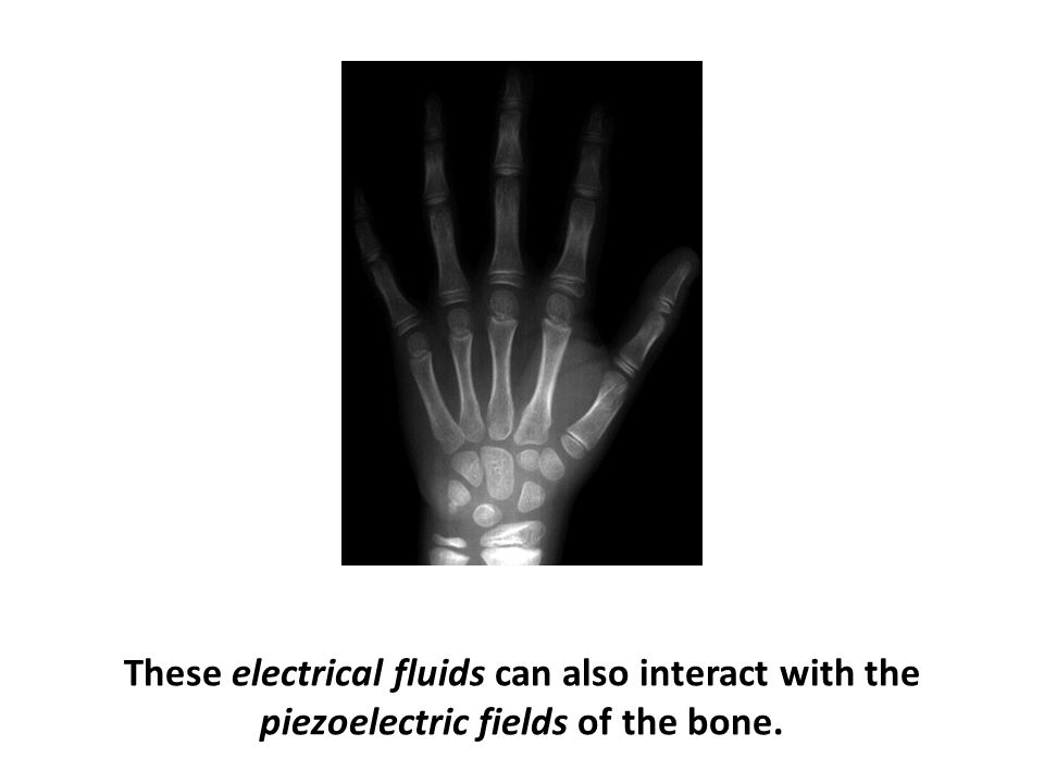 These electrical fluids can also interact with the piezoelectric fields of the bone.