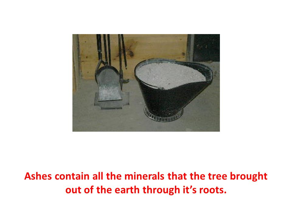 Ashes contain all the minerals that the tree brought out of the earth through it's roots.