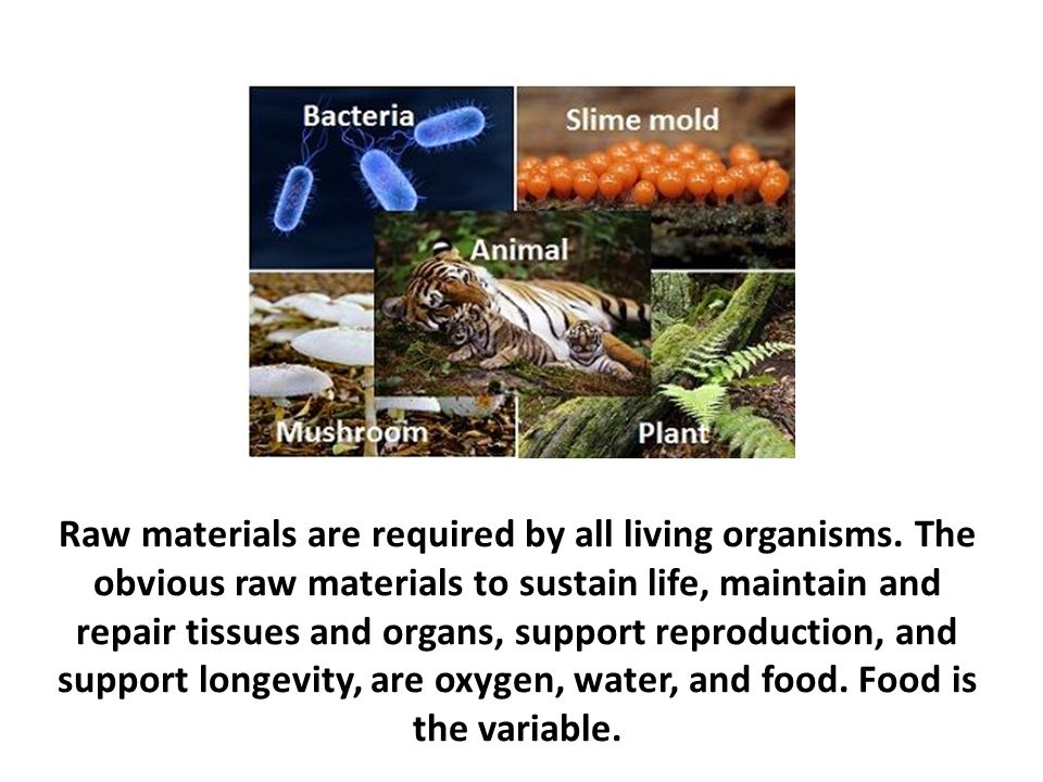 Raw materials are required by all living organisms