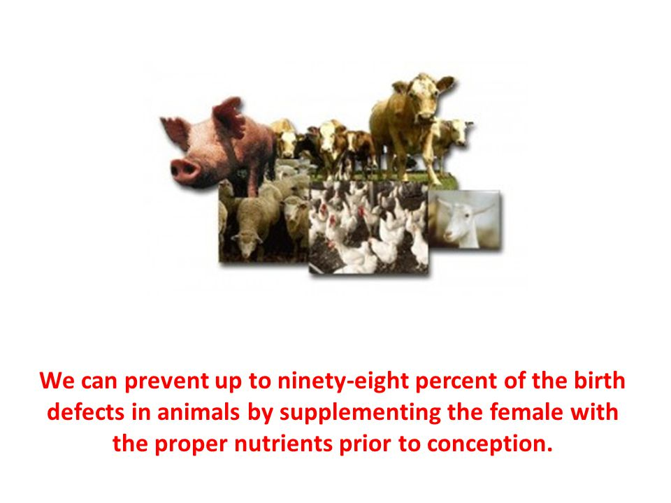 We can prevent up to ninety-eight percent of the birth defects in animals by supplementing the female with the proper nutrients prior to conception.
