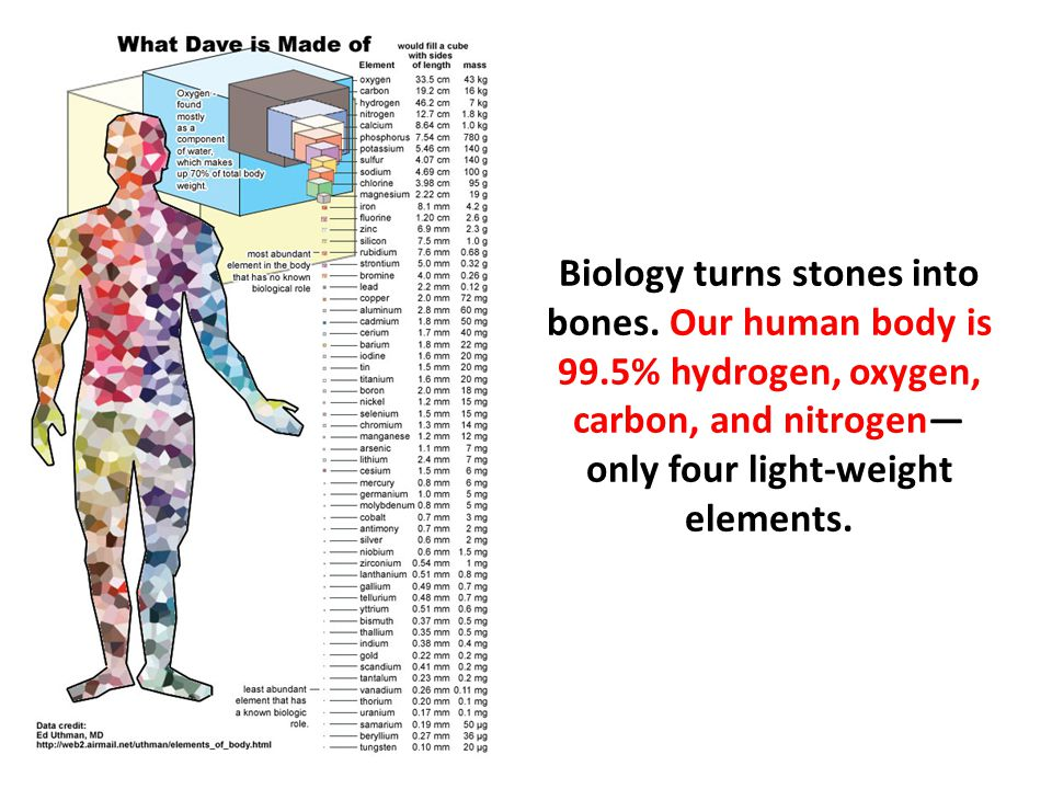 Biology turns stones into bones. Our human body is 99