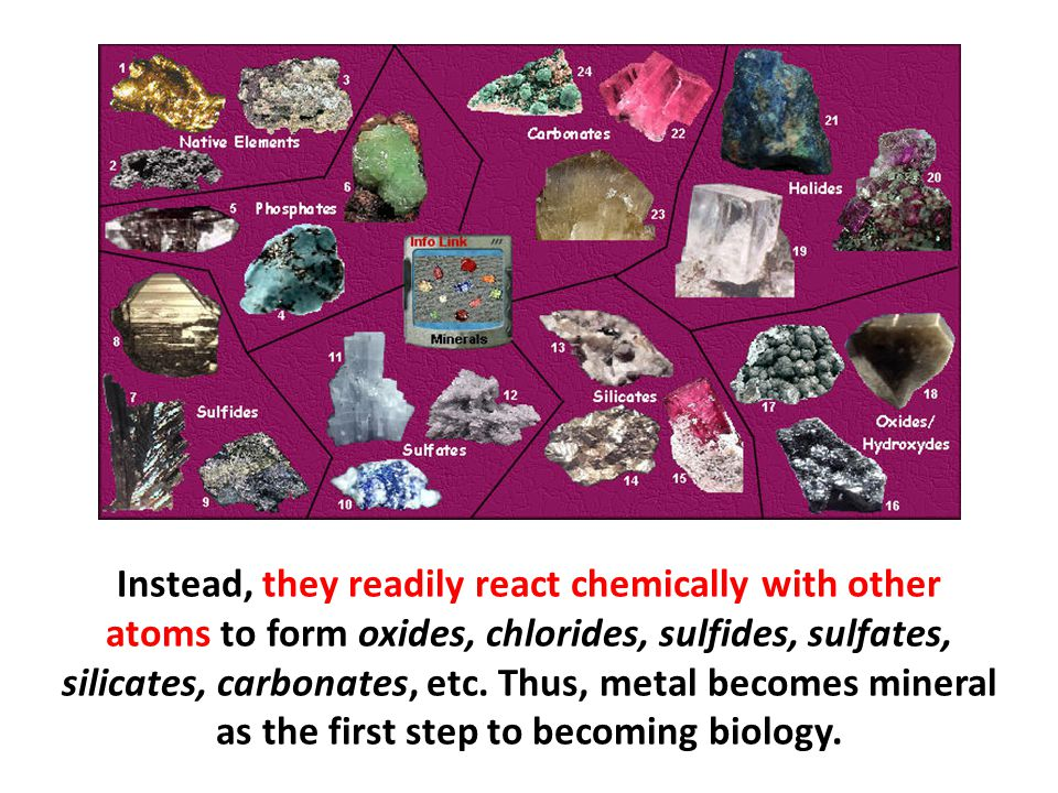 Instead, they readily react chemically with other atoms to form oxides, chlorides, sulfides, sulfates, silicates, carbonates, etc. Thus, metal becomes mineral as the first step to becoming biology.