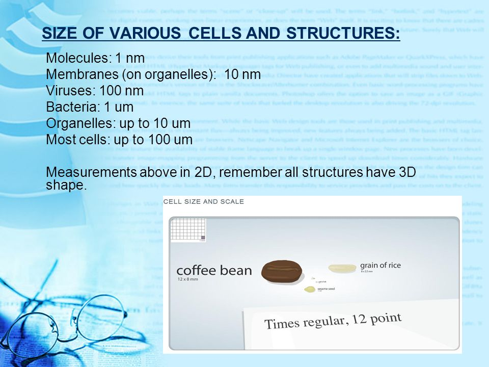 Size of various cells and structures: