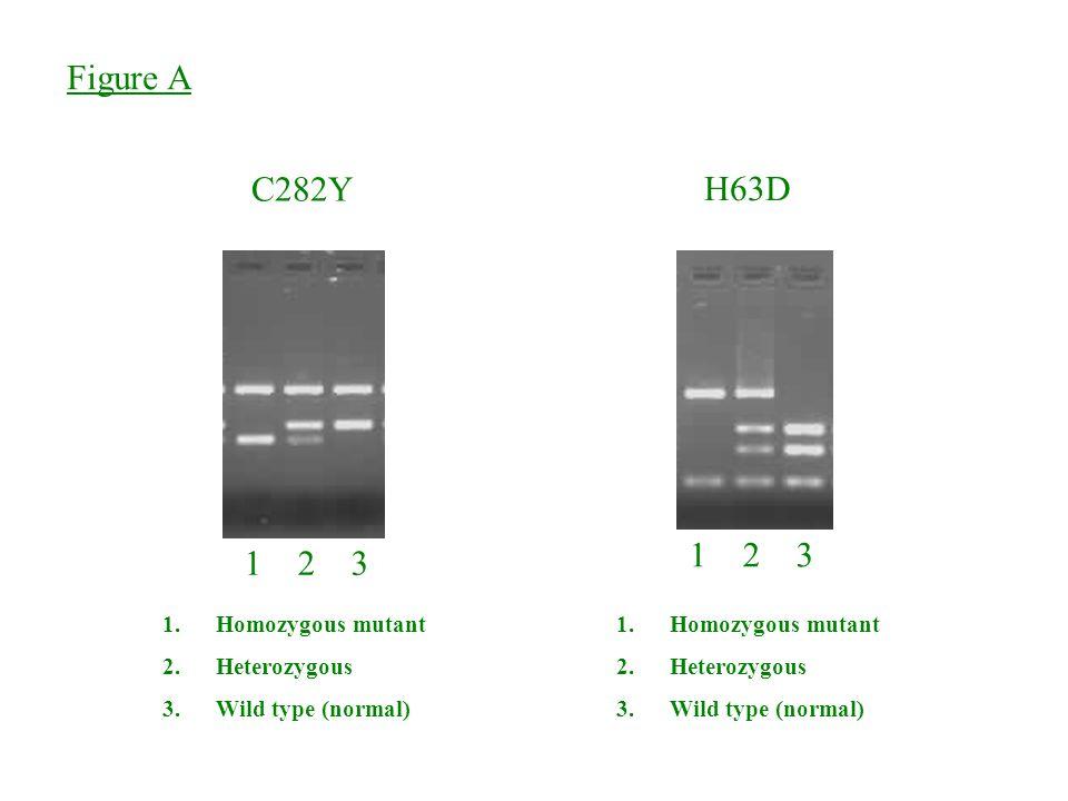 Figure A C282Y H63D 1 2 3 1 2 3 Homozygous mutant Heterozygous