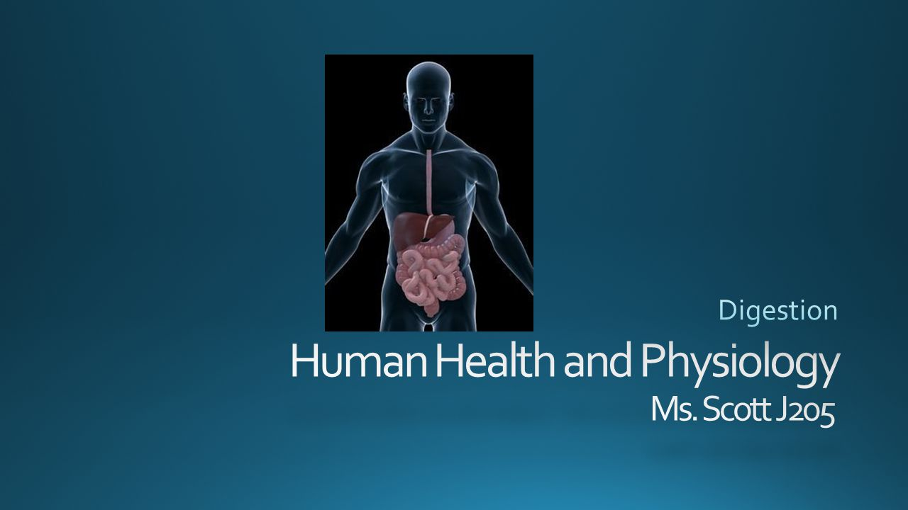 Human Health and Physiology Ms. Scott J205