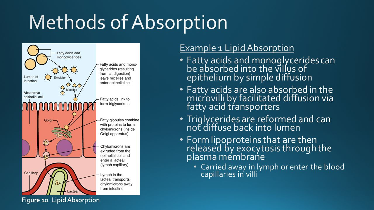 Methods of Absorption Example 1 Lipid Absorption