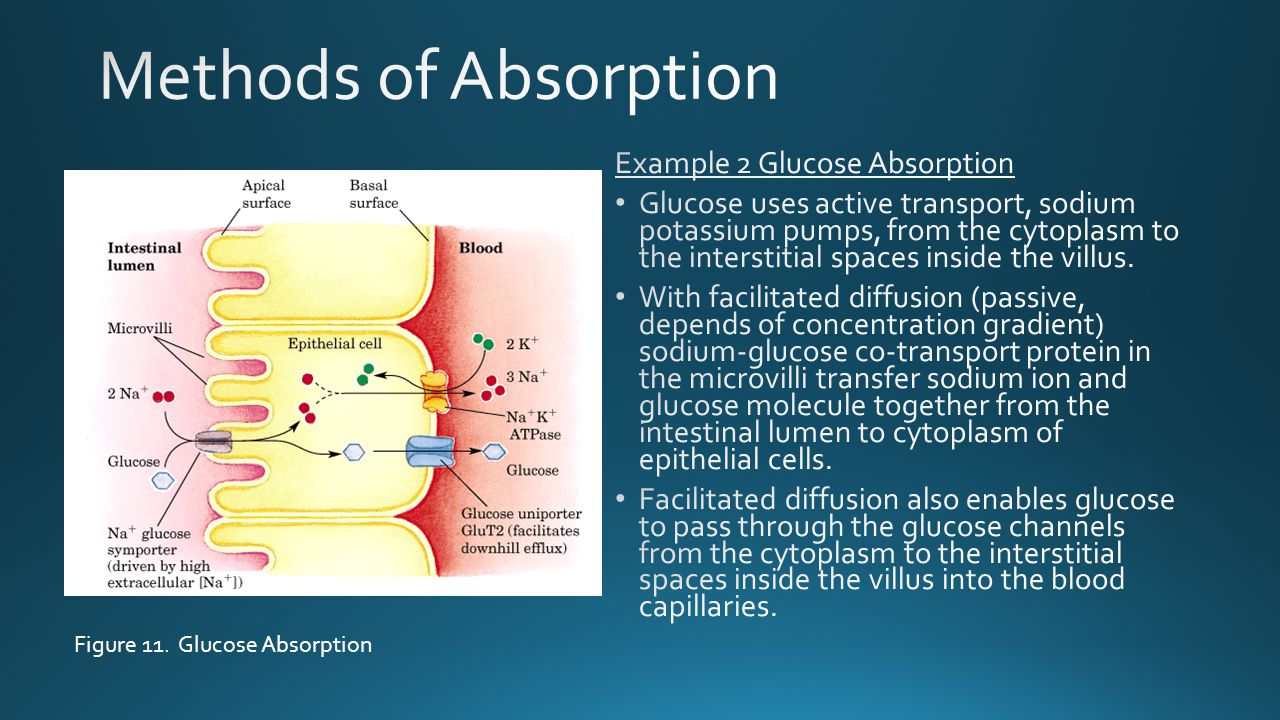 Methods of Absorption Example 2 Glucose Absorption