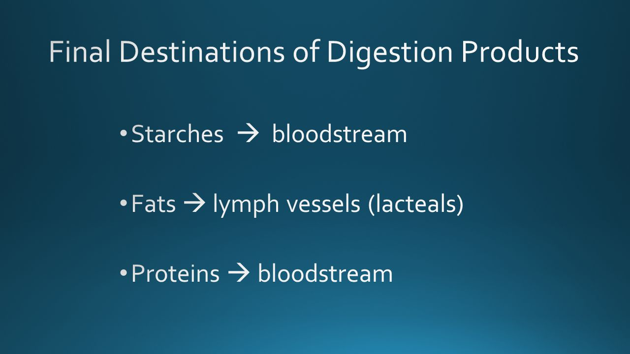 Final Destinations of Digestion Products