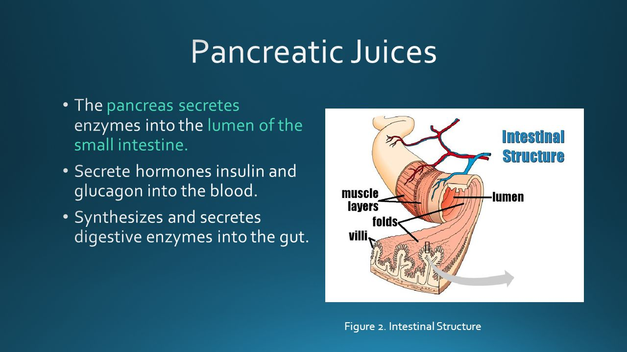 Pancreatic Juices The pancreas secretes enzymes into the lumen of the small intestine. Secrete hormones insulin and glucagon into the blood.