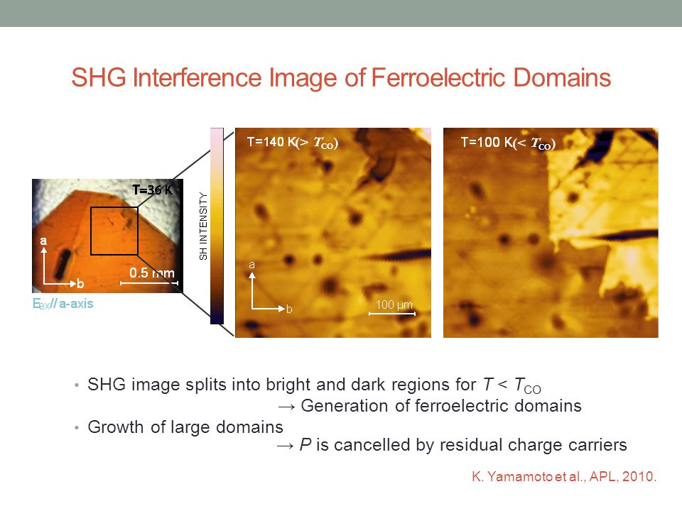 SHG Interference Image of Ferroelectric Domains