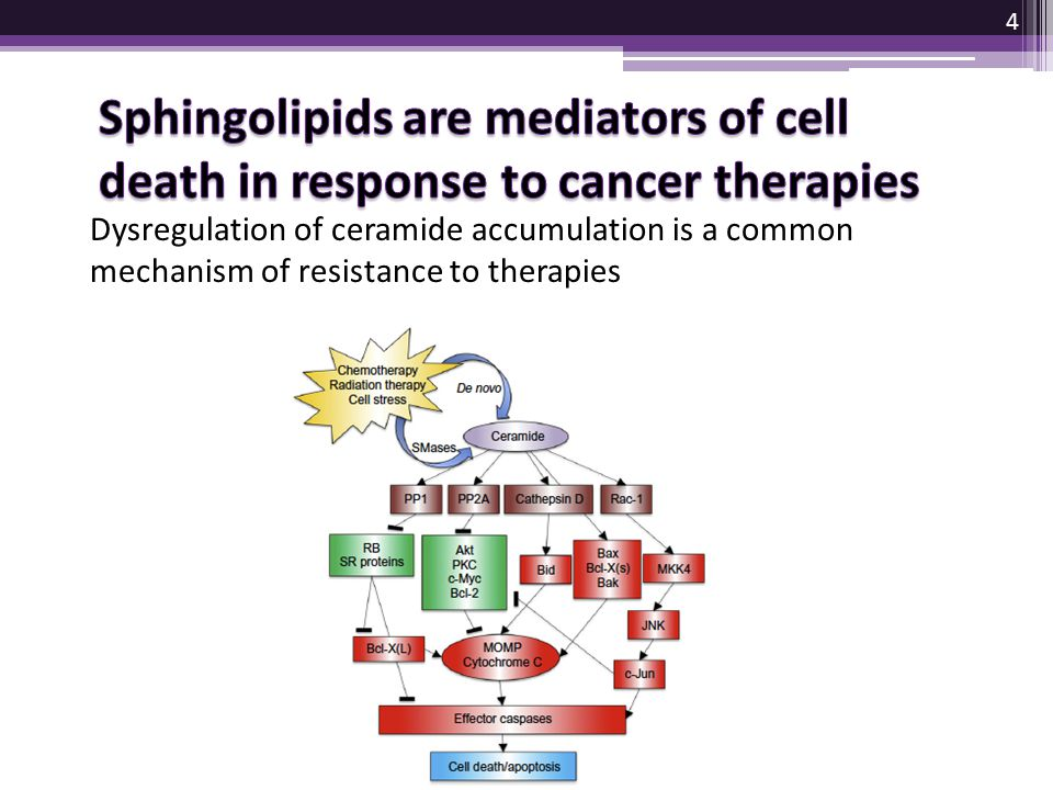 Sphingolipids are mediators of cell death in response to cancer therapies