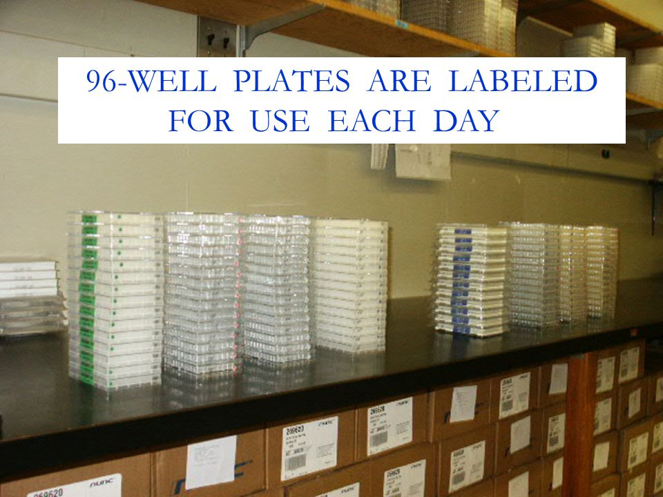 96-WELL PLATES ARE LABELED
