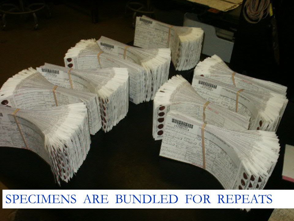 SPECIMENS ARE BUNDLED FOR REPEATS