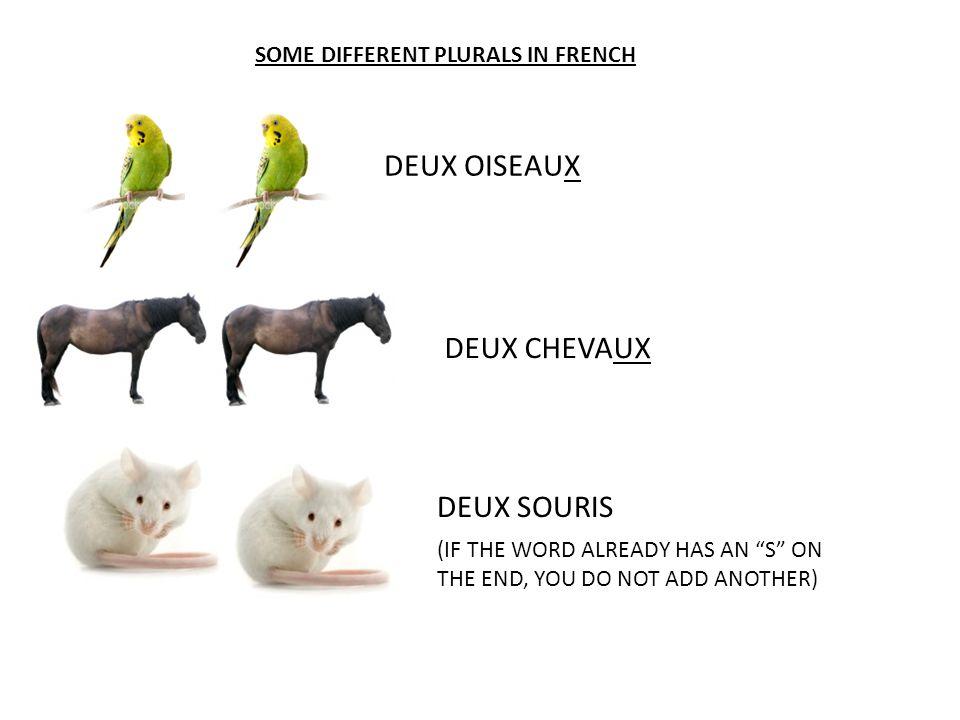 DEUX OISEAUX DEUX CHEVAUX DEUX SOURIS SOME DIFFERENT PLURALS IN FRENCH