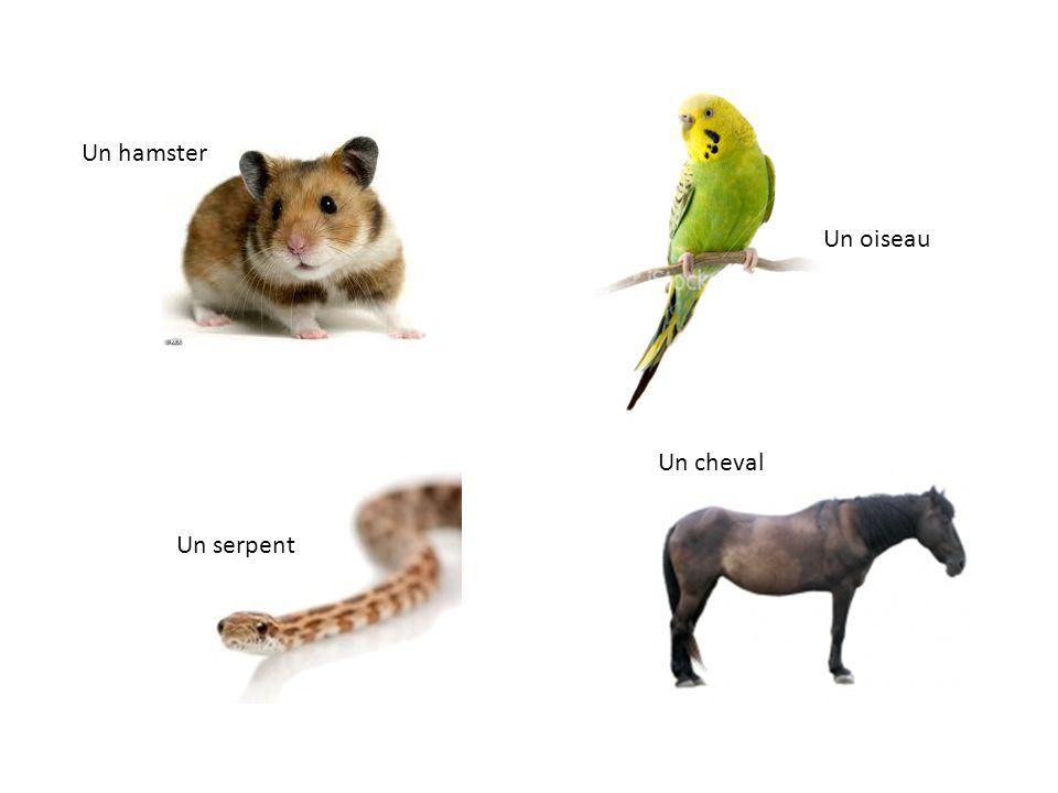 Un hamster Un oiseau Un cheval Un serpent