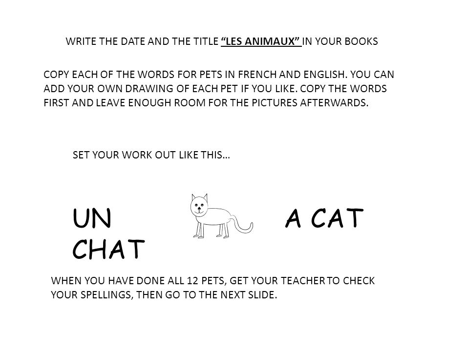 UN CHAT A CAT WRITE THE DATE AND THE TITLE LES ANIMAUX IN YOUR BOOKS