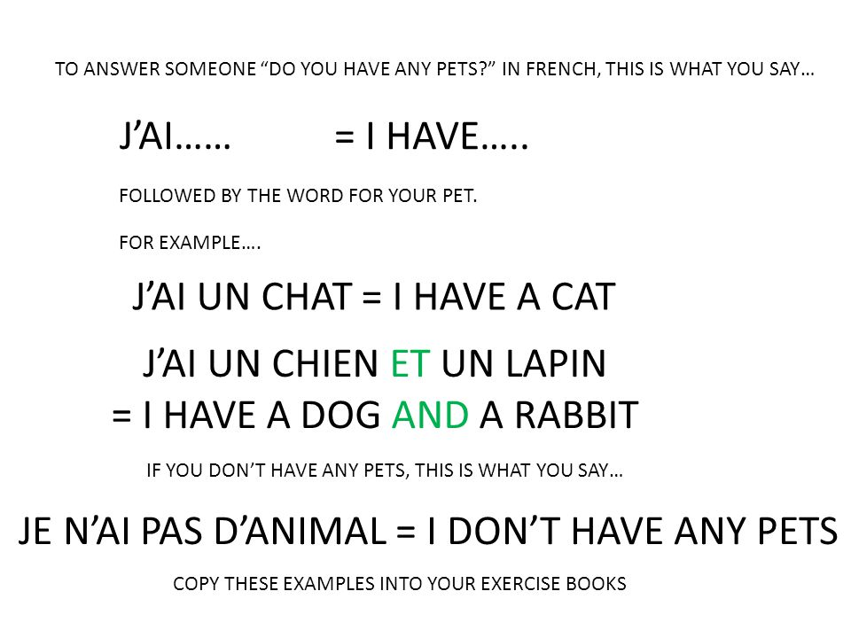J'AI UN CHAT = I HAVE A CAT