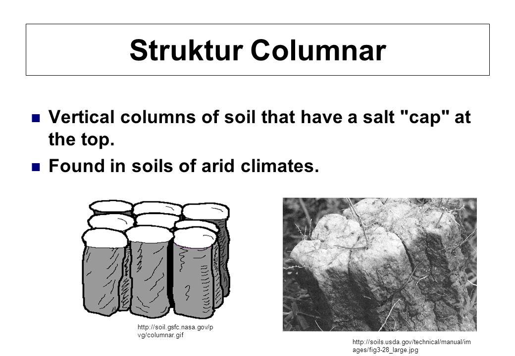 Struktur Columnar Vertical columns of soil that have a salt cap at the top. Found in soils of arid climates.