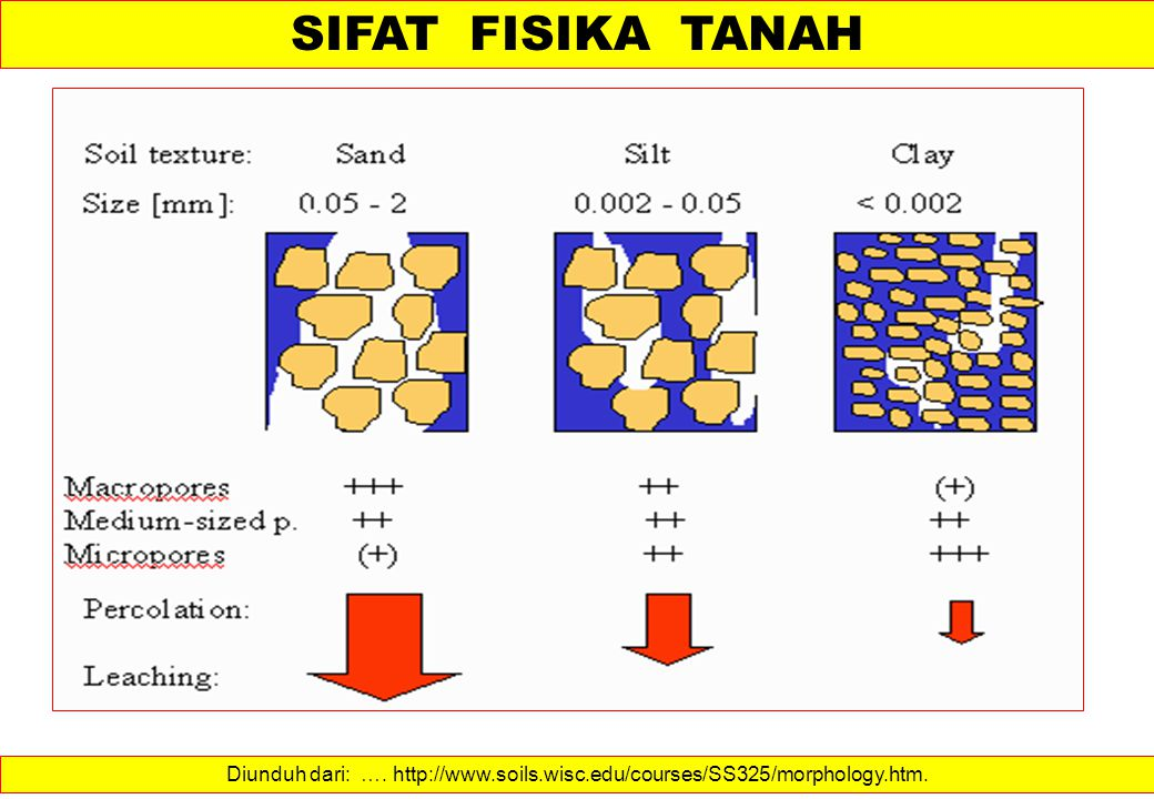 SIFAT FISIKA TANAH Diunduh dari: …. http://www.soils.wisc.edu/courses/SS325/morphology.htm.