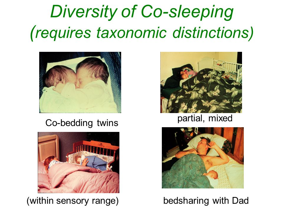 Diversity of Co-sleeping (requires taxonomic distinctions)
