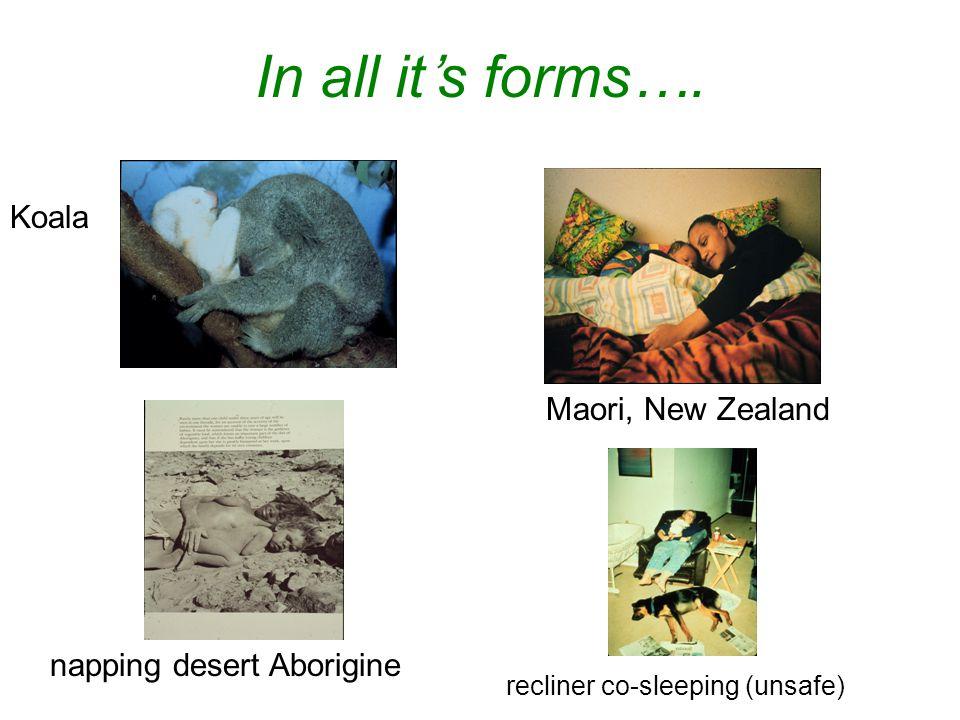 In all it's forms…. Koala Maori, New Zealand napping desert Aborigine