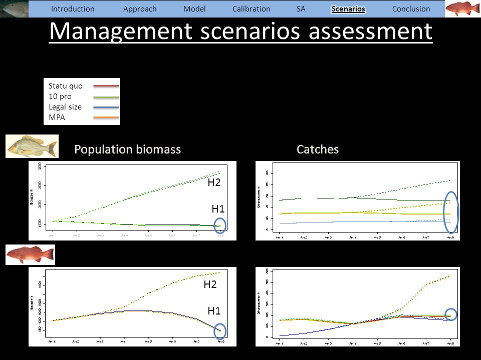 Management scenarios assessment