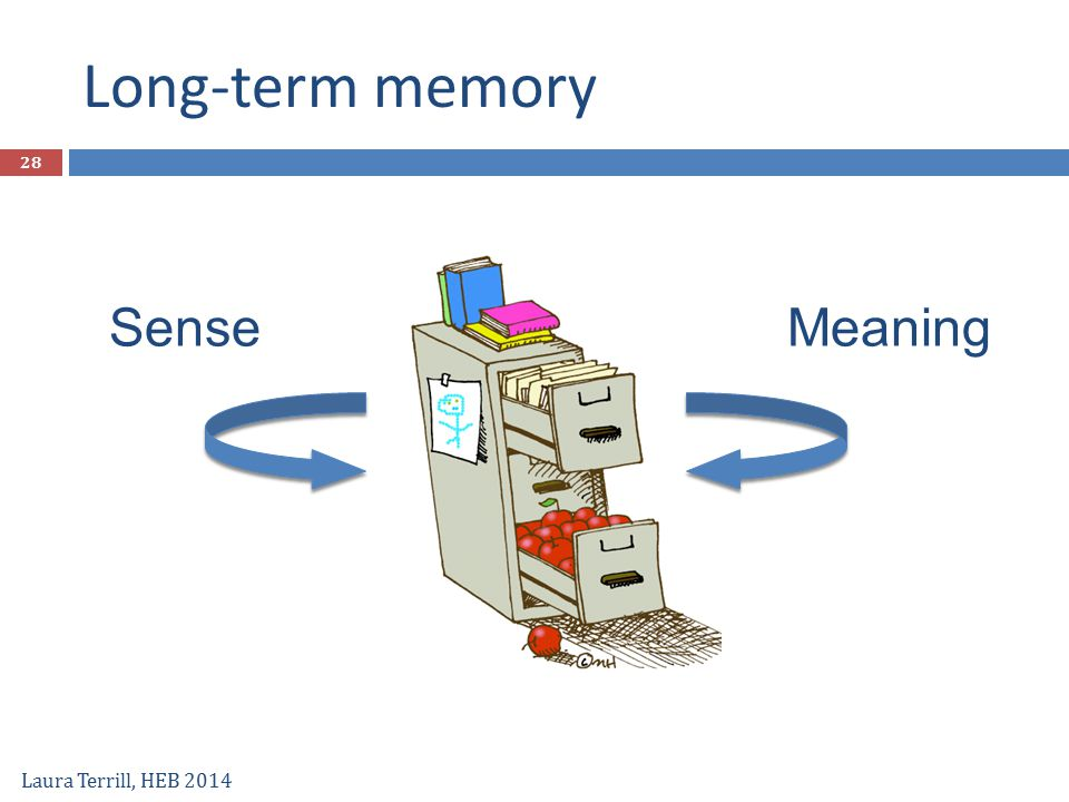 Long-term memory Sense Meaning Laura Terrill, HEB 2014