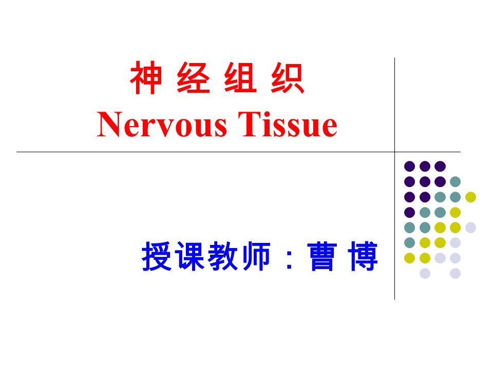 神 经 组 织 Nervous Tissue 授课教师:曹 博