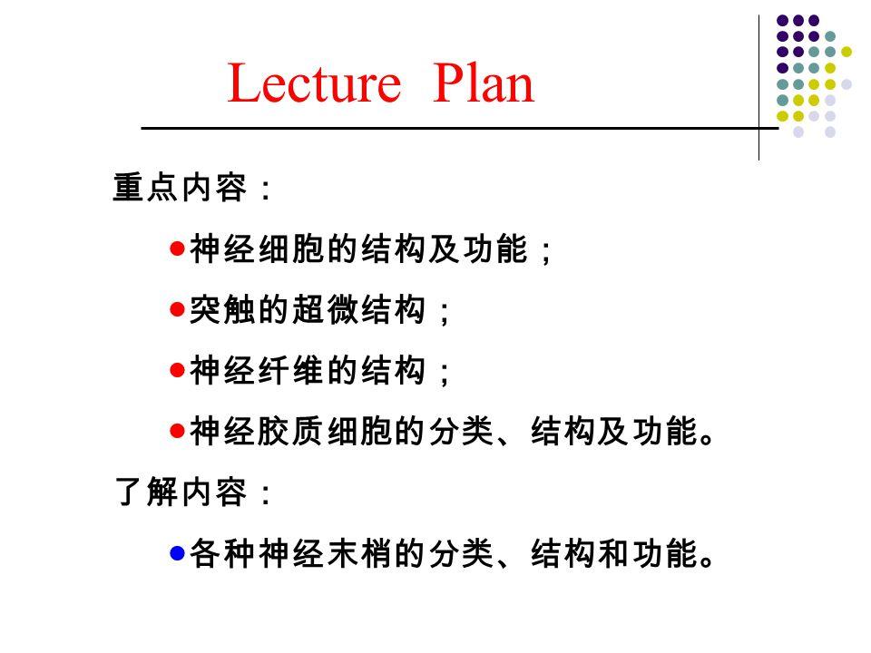 Lecture Plan 重点内容: ●神经细胞的结构及功能; ●突触的超微结构; ●神经纤维的结构; ●神经胶质细胞的分类、结构及功能。