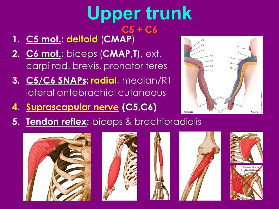 Upper trunk C5 + C6 C5 mot.: deltoid (CMAP)