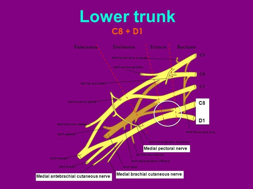 Lower trunk C8 + D1. C8. D1.