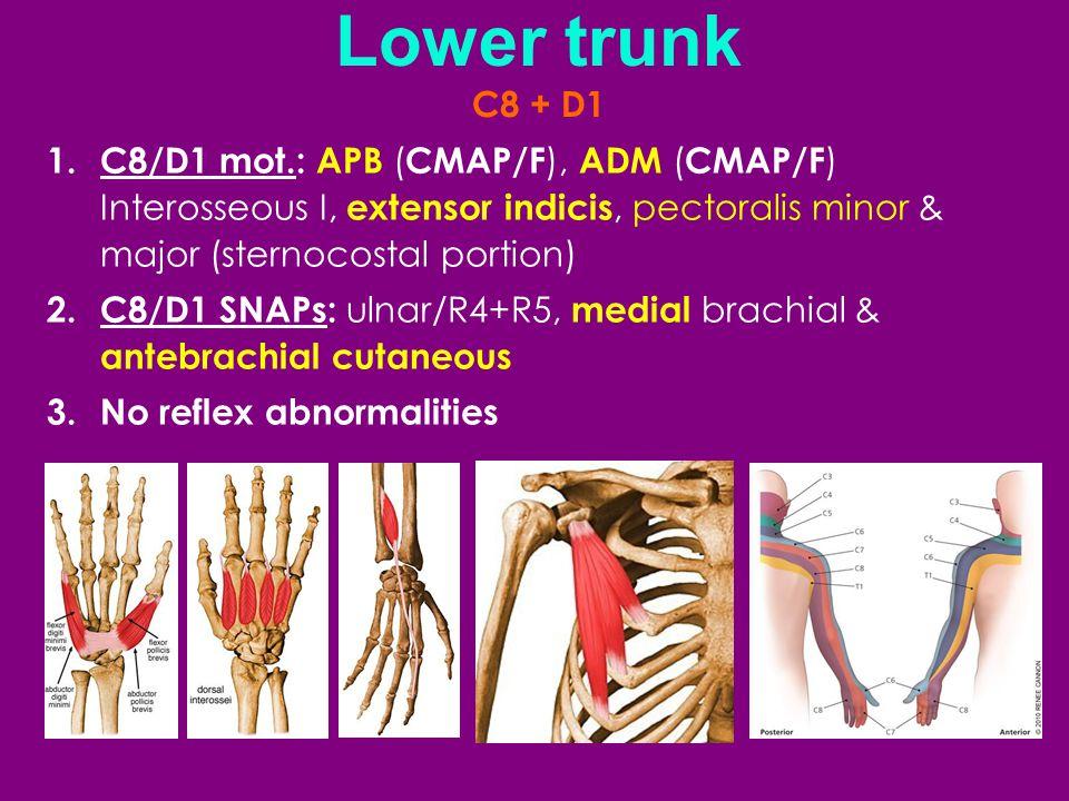 Lower trunk C8 + D1. C8/D1 mot.: APB (CMAP/F), ADM (CMAP/F) Interosseous I, extensor indicis, pectoralis minor & major (sternocostal portion)